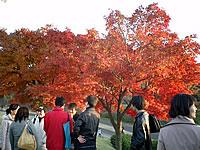 GEO Japan ★ 日本の歴史・文化 再入門。 英語で表現できますか?